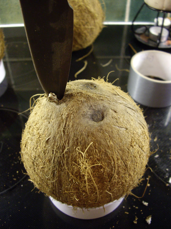 Stick a knife into one of the black spots and twist it until you're inside the coconut. One of the spots should be softer than the other two. That's the one you want to drill into.
